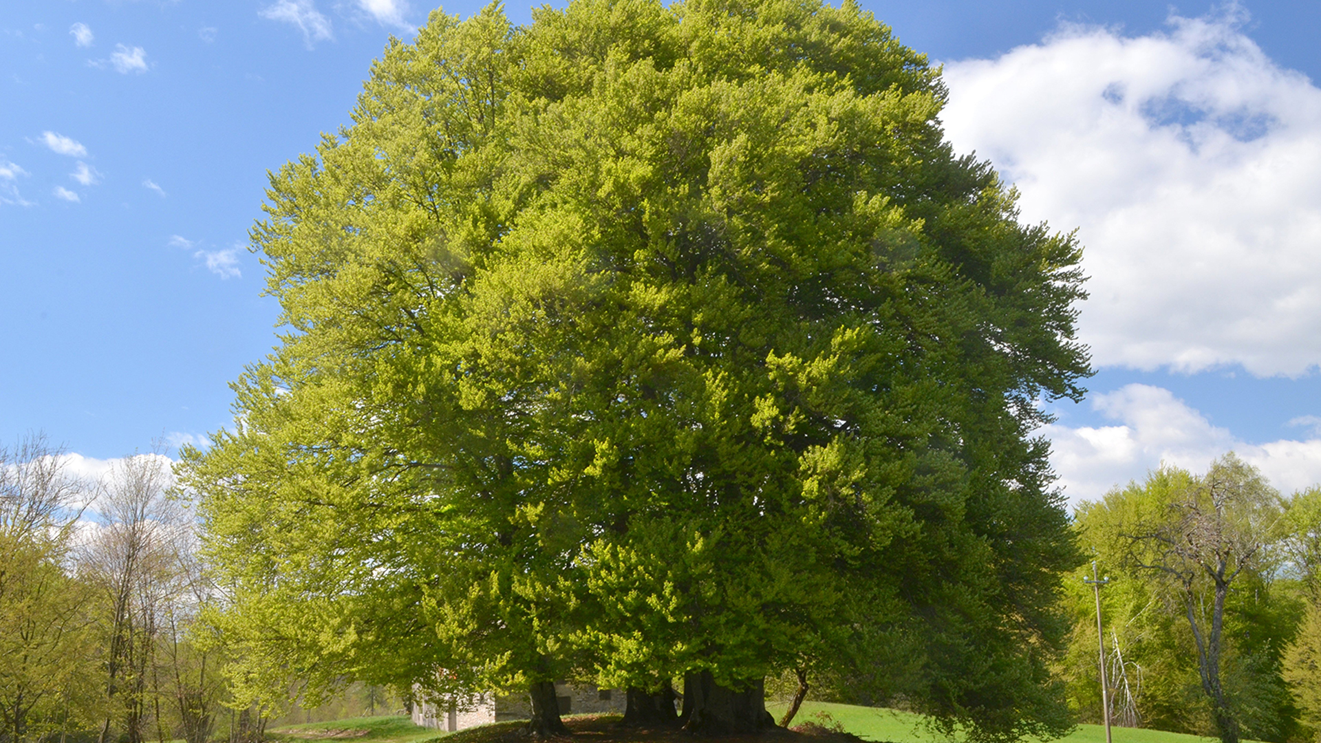 albero-vita1